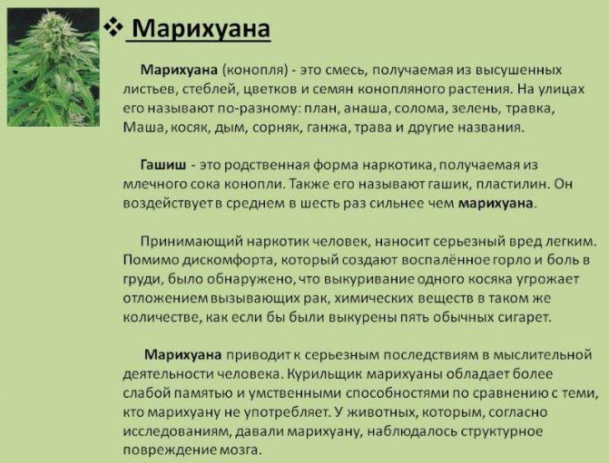 В чем разница между гашишем и марихуаной удобрение конопли кемирой